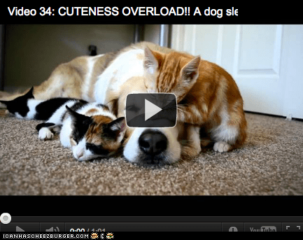 Around the Interwebs: Interspecies Cuddle Puddle (VIDEO)