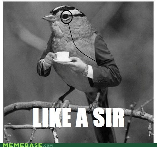 Sir Bird; How Absurd