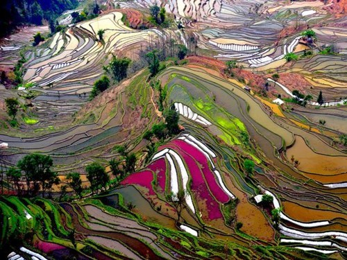 asia,China,colorful,getaways,rice terraces