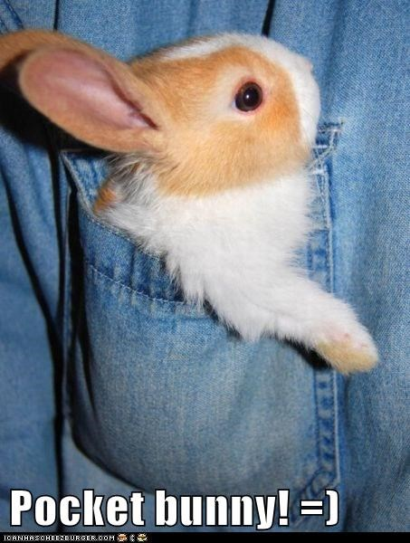 Pocket bunny! =)