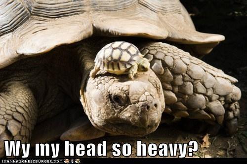 Wy my head so heavy?