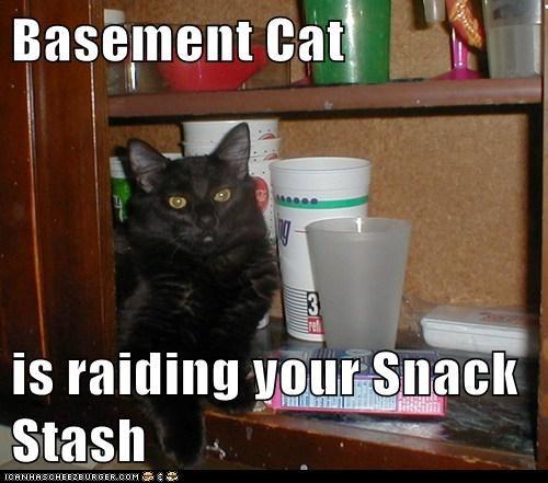Basement Cat  is raiding your Snack Stash