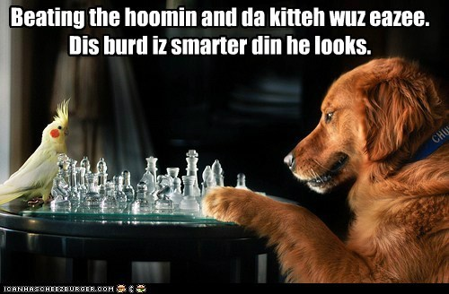 best of the week,bird,board game,chess,game,golden retriever,Hall of Fame