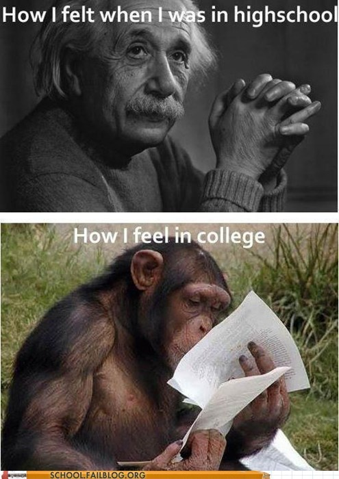 college,einstein,expectations vs reality,high school,monkey,now and then,wait what