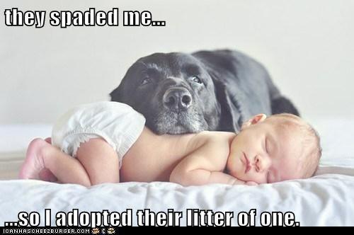 baby,Black Lab,child,human,infant,labrador retriever