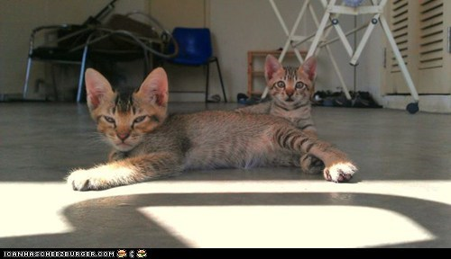 Cyoot Kittehs of teh Day: We May Look Alike, But That's Where the Similarity Ends