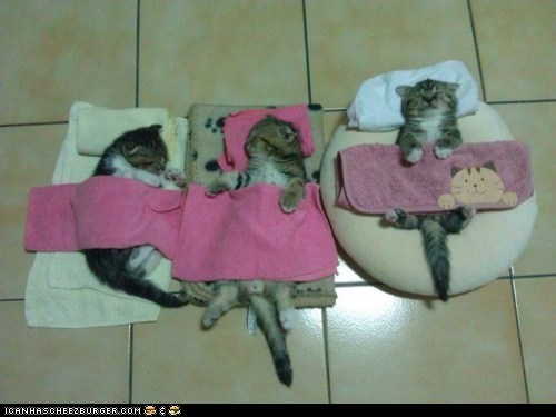 beds,best of the week,blankets,cyoot kitteh of teh day,homemade,sleeping,three cats