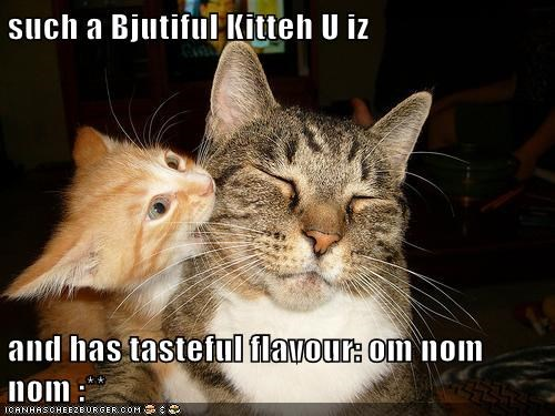 such a Bjutiful Kitteh U iz   and has tasteful flavour: om nom nom :**