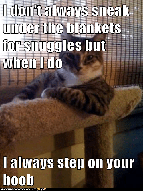 Animal Memes: The Most Interesting Cat in the World - Would You Believe It's an Accident?