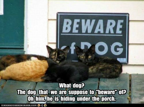 beware,caption,captioned,cat,Cats,confused,dogs,hiding,porch,sign,under
