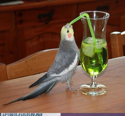 appletini,brids,cockatoo,crunk critters,i have no idea what bird this is,parakeet,scrubs