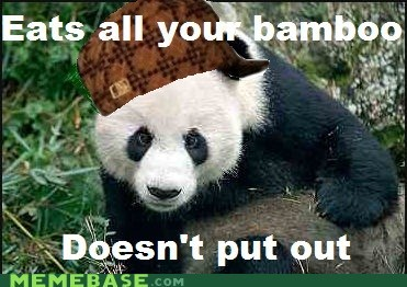 Scumbag Panda Is Worst Zoo Exhibit