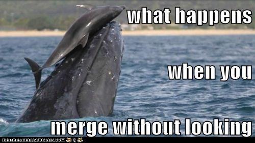 collide,dolphin,merge,ocean,whale