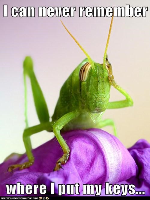 And Then I Remember: I'm a Grasshopper