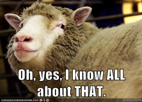 implying,knowing,sheep,suspicious,wink