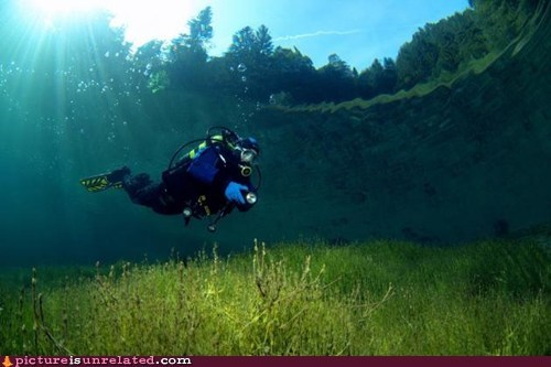 Diving In The Forest