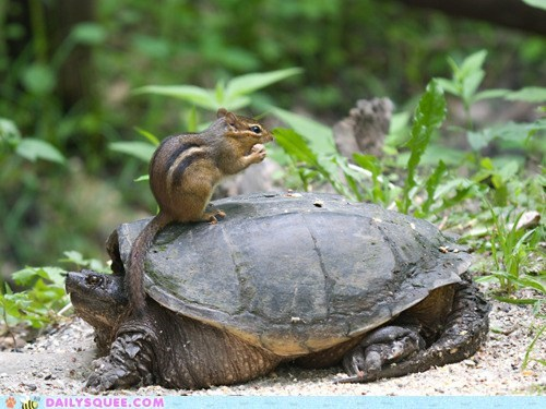 Acting Like Animals: Wrong Way on a One Way... tortoise?
