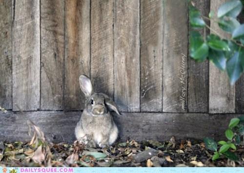 antenna,bunny,ear,Hall of Fame,happy bunday,message,rabbit,radio,transmission
