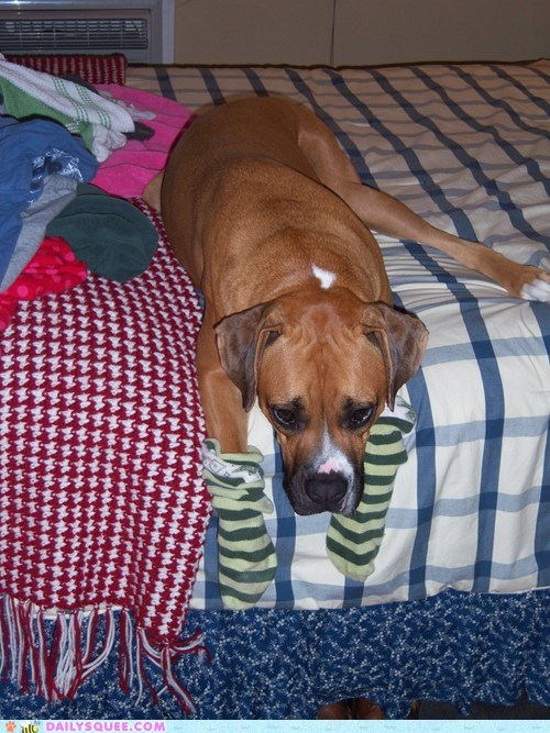 Reader Squees: Socks of Shame