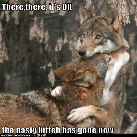 comfort,gone,kitteh,kitty,nasty,Sad,scared,there there,wolves