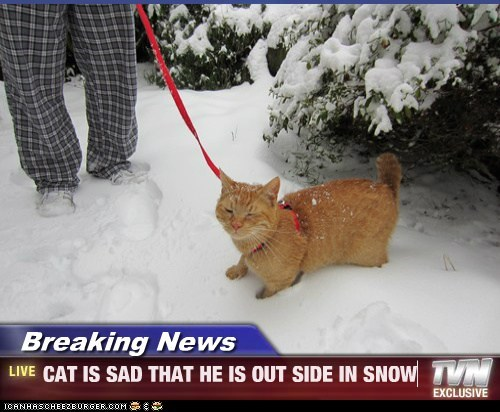 Breaking News - CAT IS SAD THAT HE IS OUT SIDE IN SNOW