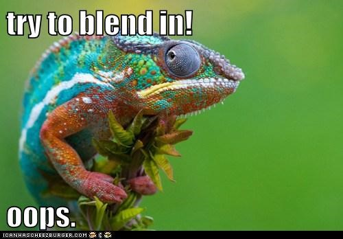 try to blend in!  oops.