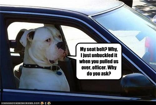 My seat belt? Why, I just unbuckled it when you pulled us over, officer. Why do you ask?