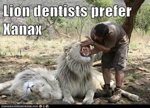 Lion dentists prefer Xanax