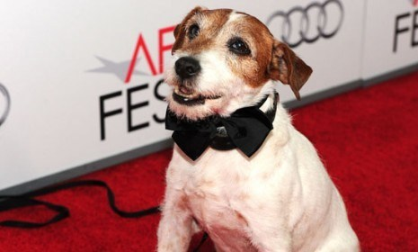 Uggie Follow Up of the Day