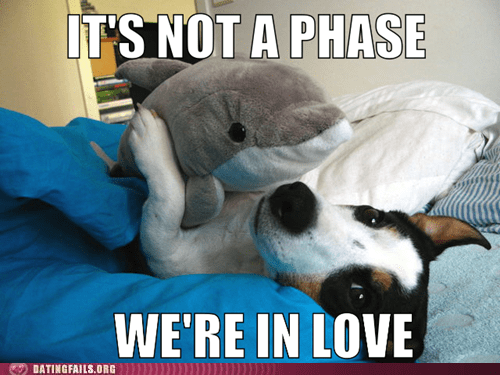 dolphin,phase,puppy love,stuffed animal,teenagers,the one,true love