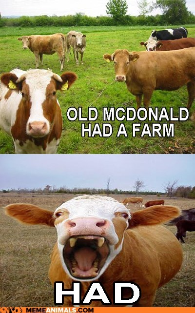 cows,crazy,insane,multipanel,old mcdonald,scary