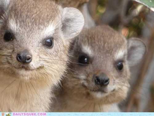 Squee Spree: Two of a Kind