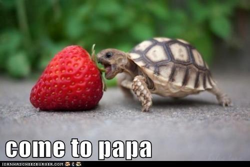 eat,food,nom,strawberry,tortoise,turtle,yum