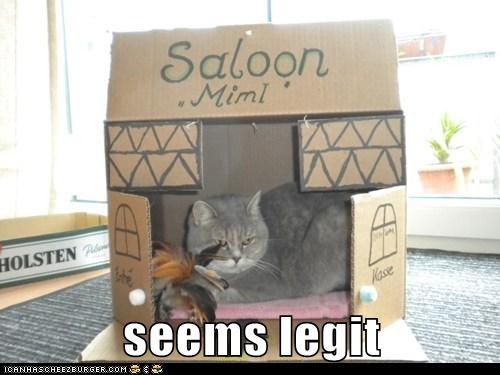 box,caption,captioned,cat,legit,pretend,pretending,saloon,seems