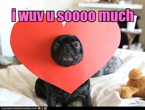 best of the week,Hall of Fame,heart,heart hat,i love you,love,pug,valentines-day-pug