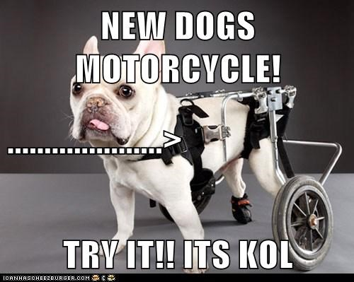 NEW DOGS MOTORCYCLE! .....................> TRY IT!! ITS KOL