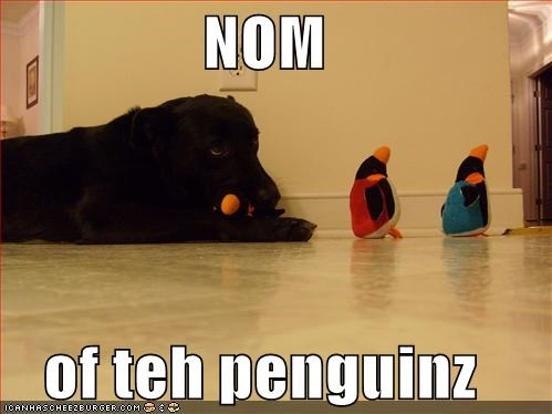 NOM  of teh penguinz