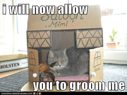 i will now allow  you to groom me