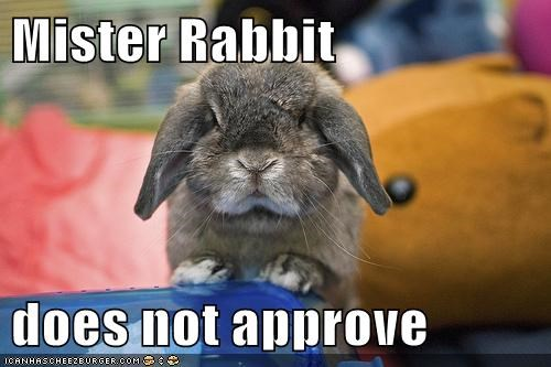 Mister Rabbit  does not approve