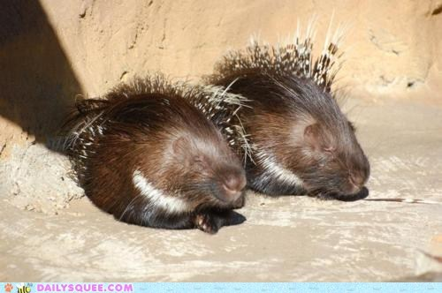 Whatsit Wednesday: Sleepy Fuzzy Prickly Squees