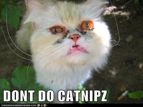 DONT DO CATNIPZ