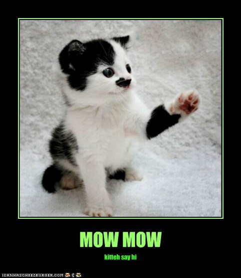MOW MOW