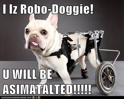 I Iz Robo-Doggie!  U WILL BE ASIMATALTED!!!!!