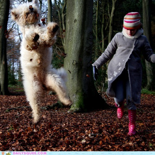 acting like animals,dogs,feeling,figurative,goldendoodle,idiom,Joy,jumping,literal,literalism,name