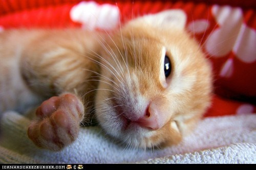 Cyoot Kitteh of teh Day: Closeup Cutie