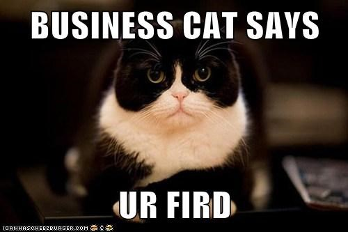 BUSINESS CAT SAYS  UR FIRD