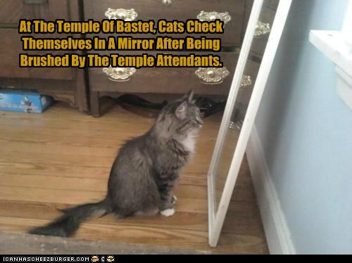 At The Temple Of Bastet, Cats Check Themselves In A Mirror After Being Brushed By The Temple Attendants.