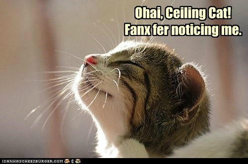 Ohai, Ceiling Cat!Fanx fer noticing me.