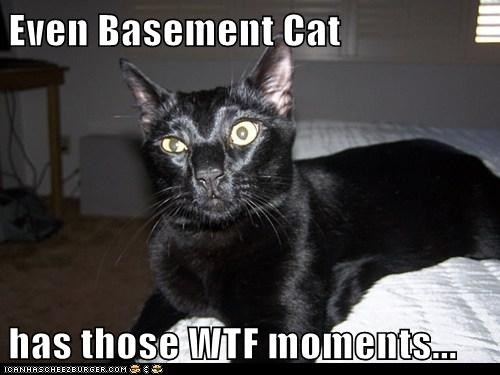 Even Basement Cat  has those WTF moments...