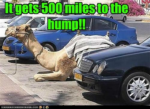 animals,camel,gas mileage,parked,parking